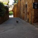2018 maggio Montalcino 6
