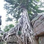2018 novembre Cambogia 5