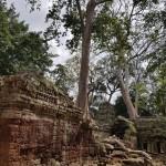 2018 novembre Cambogia 6